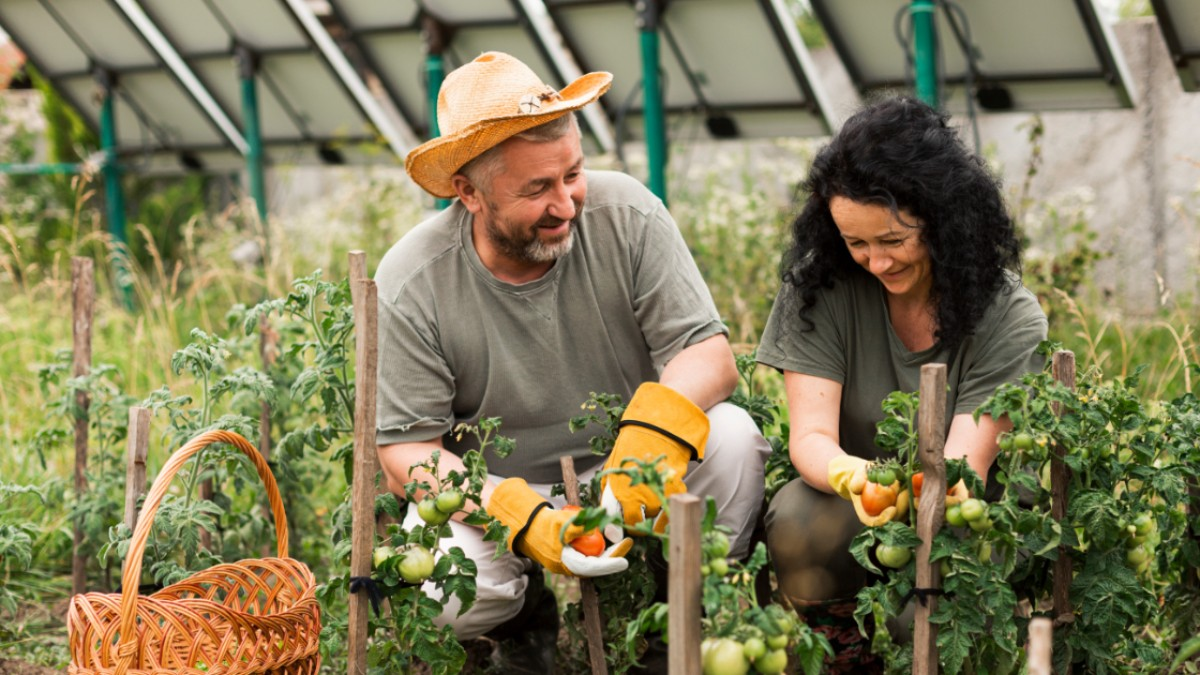 4 Easy Steps to Plant a Vegetable Garden