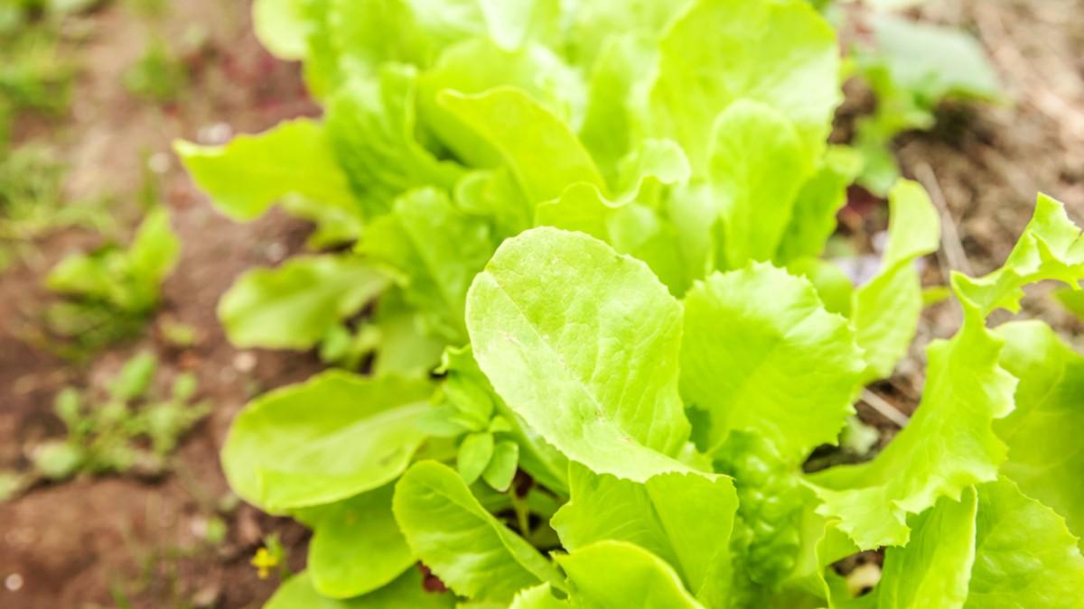 Top 3 Most Effective ways to Your Veggies growing season
