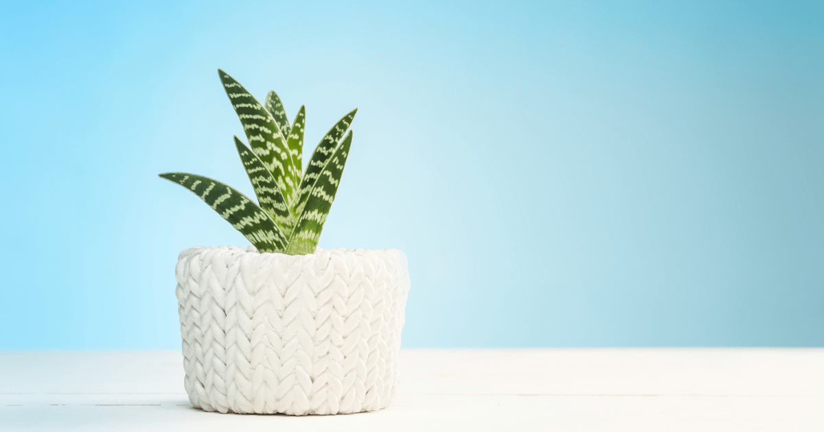 New Plants Trend in 2020 for Beautiful Home gardens